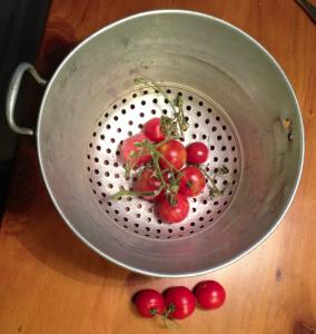 Tomaten_dezember