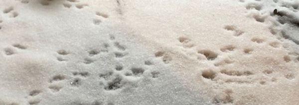 Deine Spuren im Schnee…